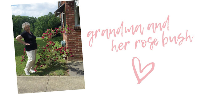 Dena Cooper's grandma and her favorite rose bush