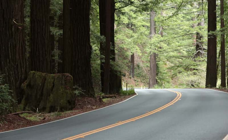 united-states,sequoia-sempervirens,u.s.-route-101-in-california,eel-river-athapaskan-peoples,humboldt-redwoods-state-park,marathon