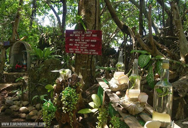 Camiguin-la-isla-verde-que-ver-hacer-giant-clam-save-the-planet