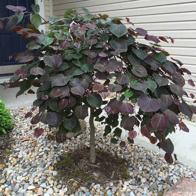 Recap Best Blooms Summer 2016 Backyard Neophyte