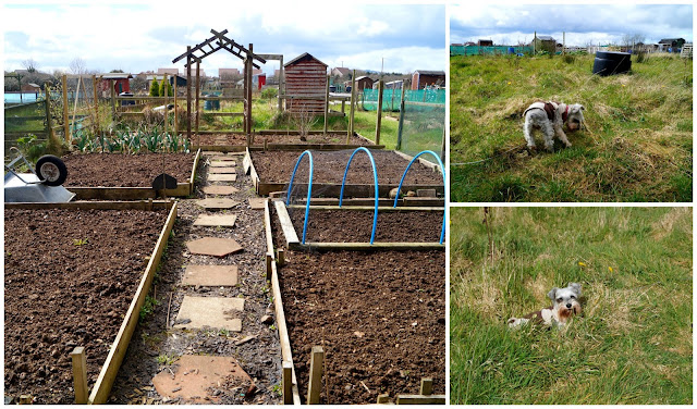 our plot and theirs - growourown.blogspot.com ~ an allotment blog