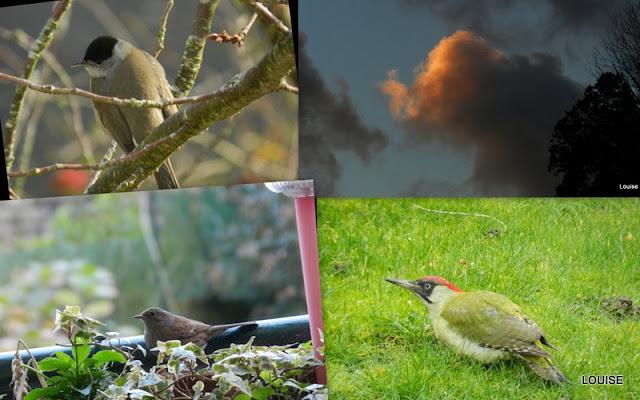 not u0026 39 e louise  oiseaux   chat et jardin