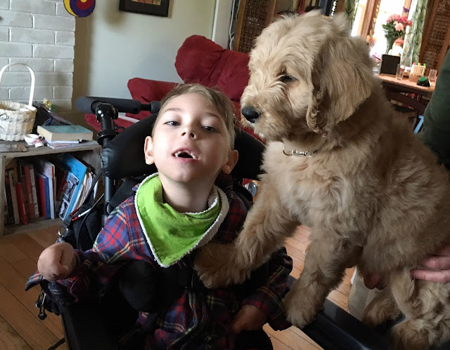 How one family's dream of a service dog came true