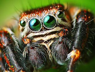 hewan terpintar dan tercerdas di dunia - laba-laba