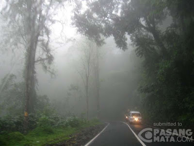 Kabut di gunung Gumitir perbatasan Jember-Banyuwangi.