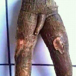 ketela pohon