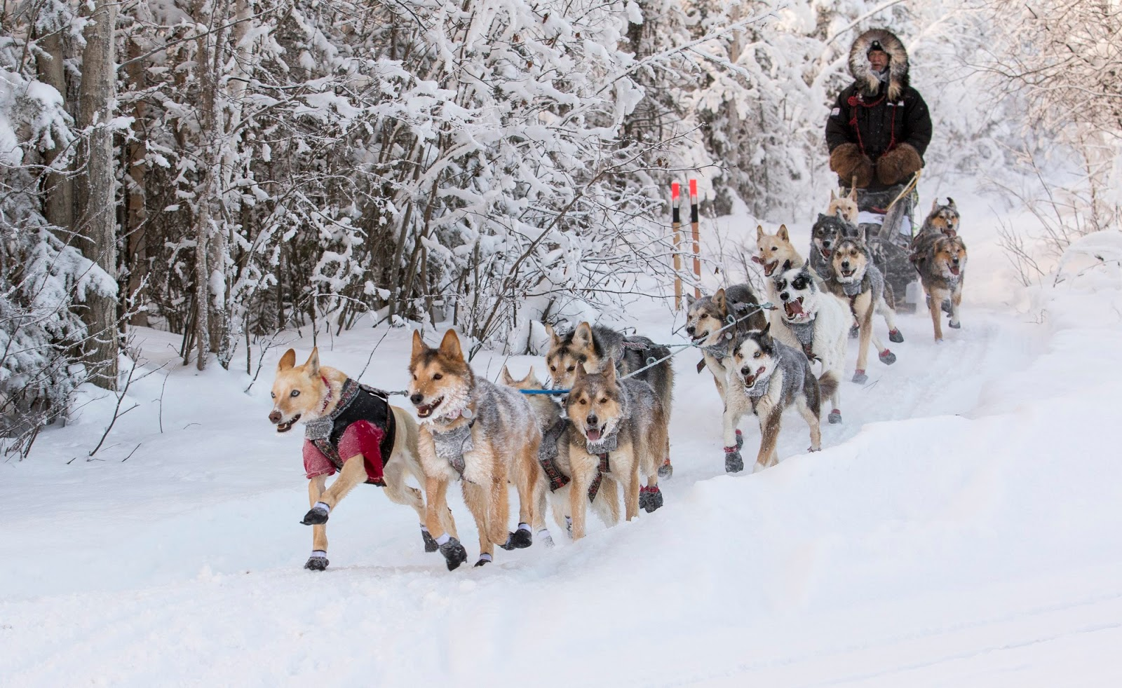 winter carnivals around the world you cannot miss