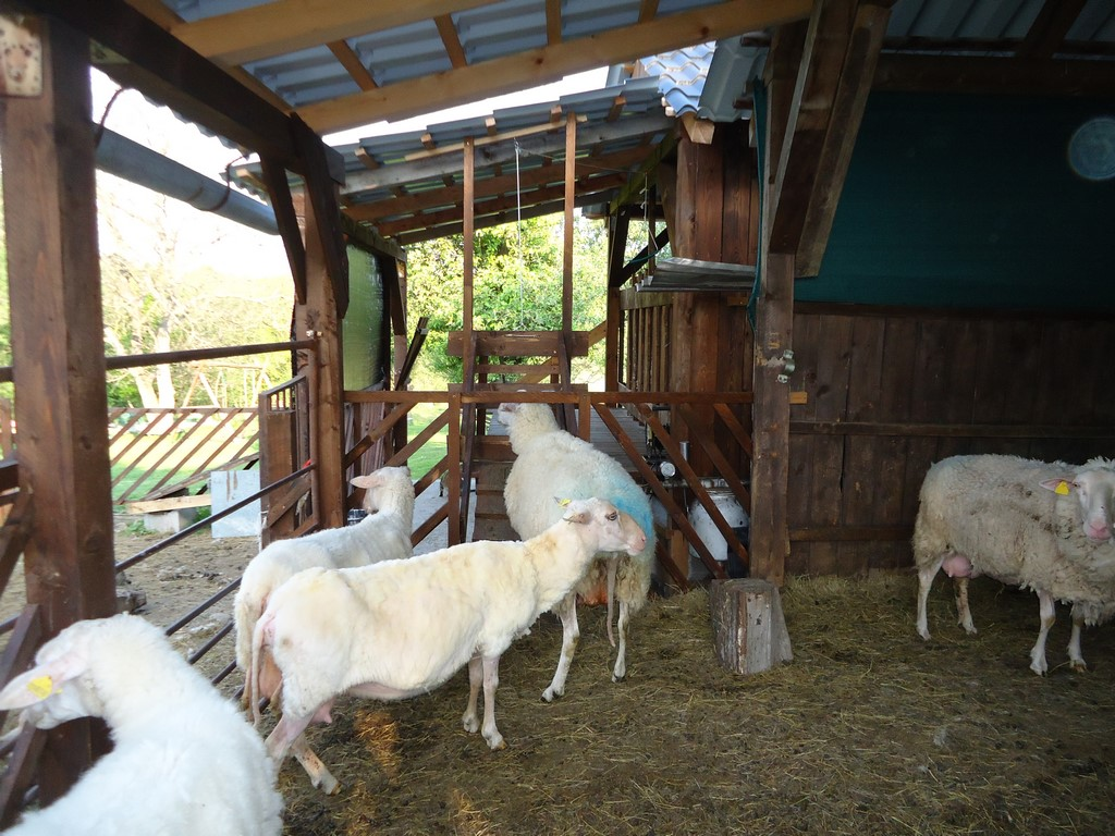 how to make a sheep shearing stand