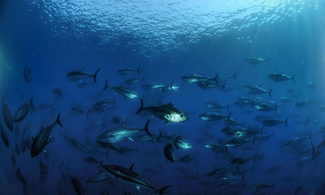 Closing parts of the ocean to fishing not enough to protect marine ecosystems