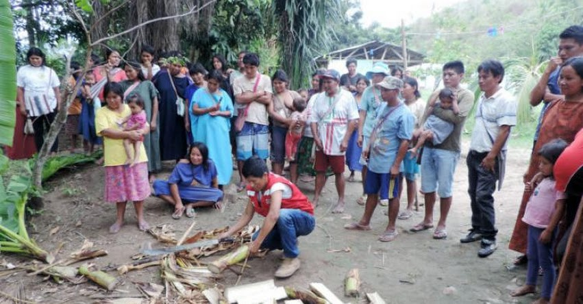 Qali Warma promueve la implementación de huertos escolares agroecológicos en escuelas de comunidad nativa de la selva central - www.qaliwarma.gob.pe
