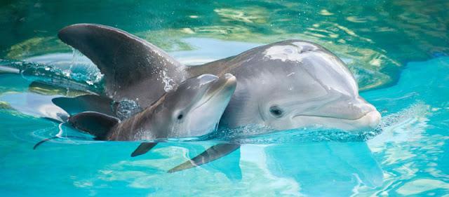 Onde nadar com golfinhos em Cancún no México