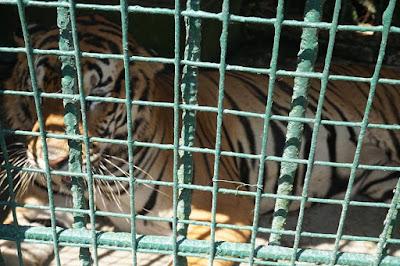 Zoori Zoo in Tagaytay