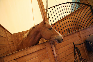 A chestnut horse standing with his head over a wooden stable door