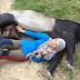 Cewek Berjilbab Berfoto dengan Binatang Bikin Heboh Netizen