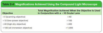 Table: Magnifications Achived Using the Compound Light Microscope