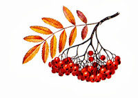 Картинка дерева рябины для детей