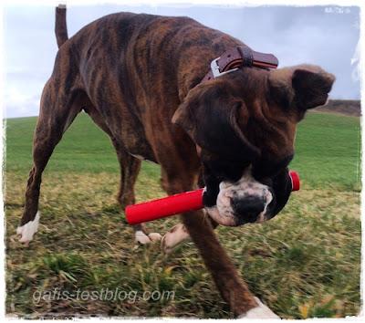 Boxer Amy sucht Mäuschen