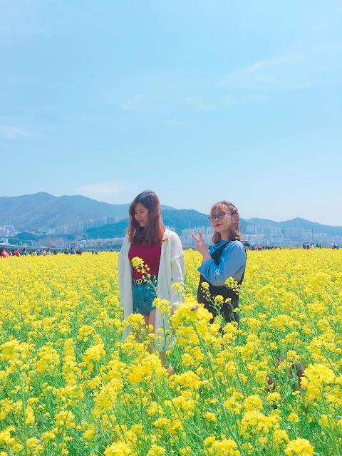Cùng Du Học Sinh Việt Nam ngắm lễ hội hoa cải tại Busan Hàn Quốc