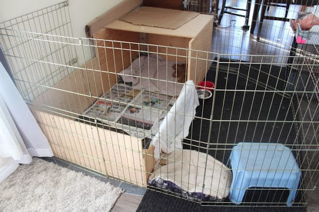 whelping pen with fence