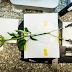 Ελληνίδα έφτιαξε φυτό που αποθηκεύει ηλεκτρική ενέργεια