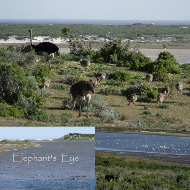 Ostrich family and flamingos at Wadrifsoutpan