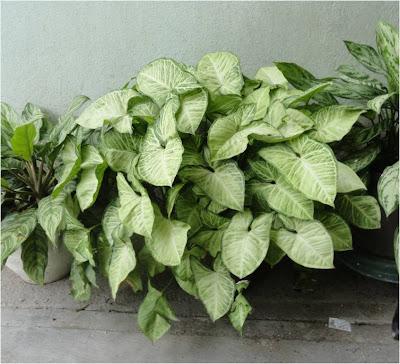 Plantas Que Crecen Bien A La Sombra