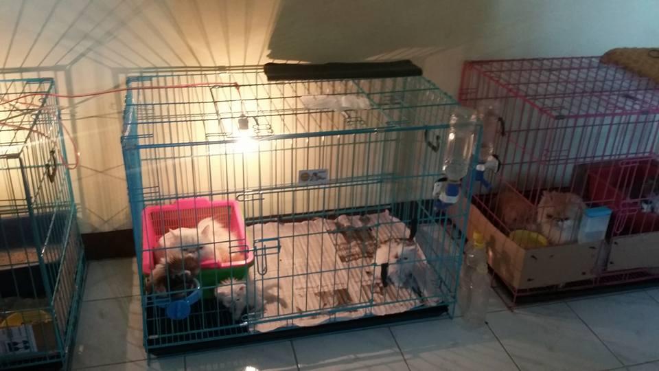 Peternakan Kucing Di Bandung Kucing Bandung