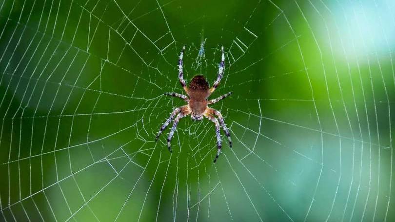 size_810_16_9_teia-de-aranha Quatro Materiais Que Mudarão o Mundo