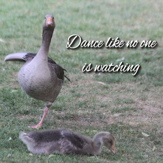 MOTHER GOOSE'S LESSON FOR THE DAY
