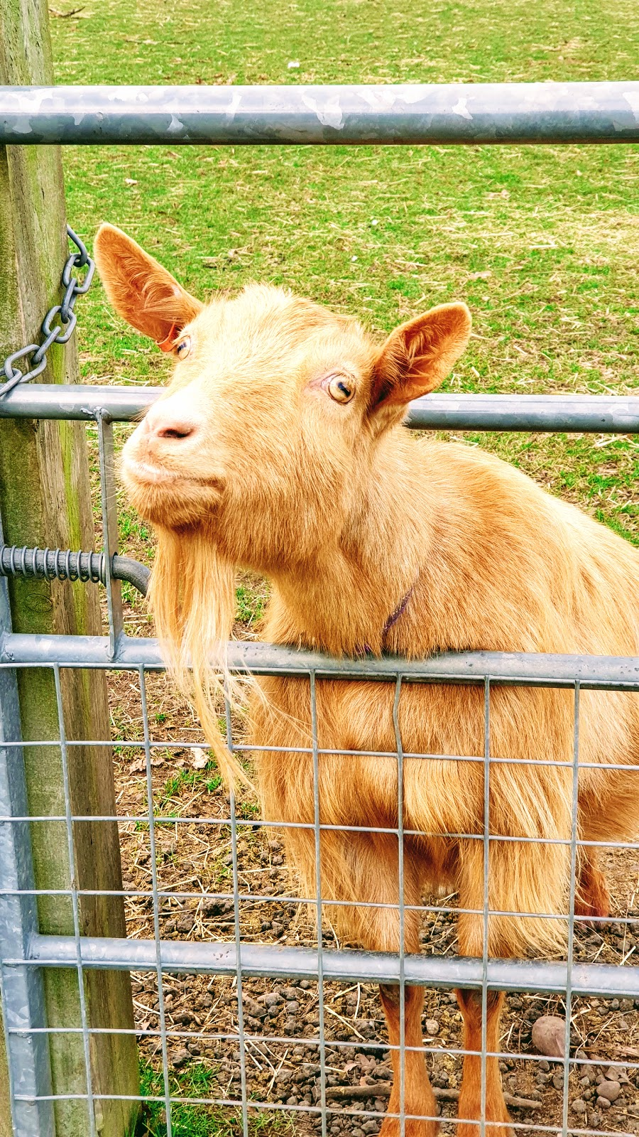 You Have Goat To Be Kidding Me: Wordless Wednesday Link Up