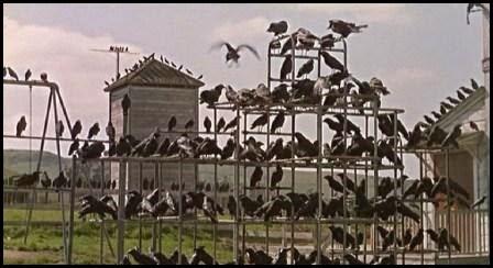 Los pájaros (Alfred Hitchcock, 1963)