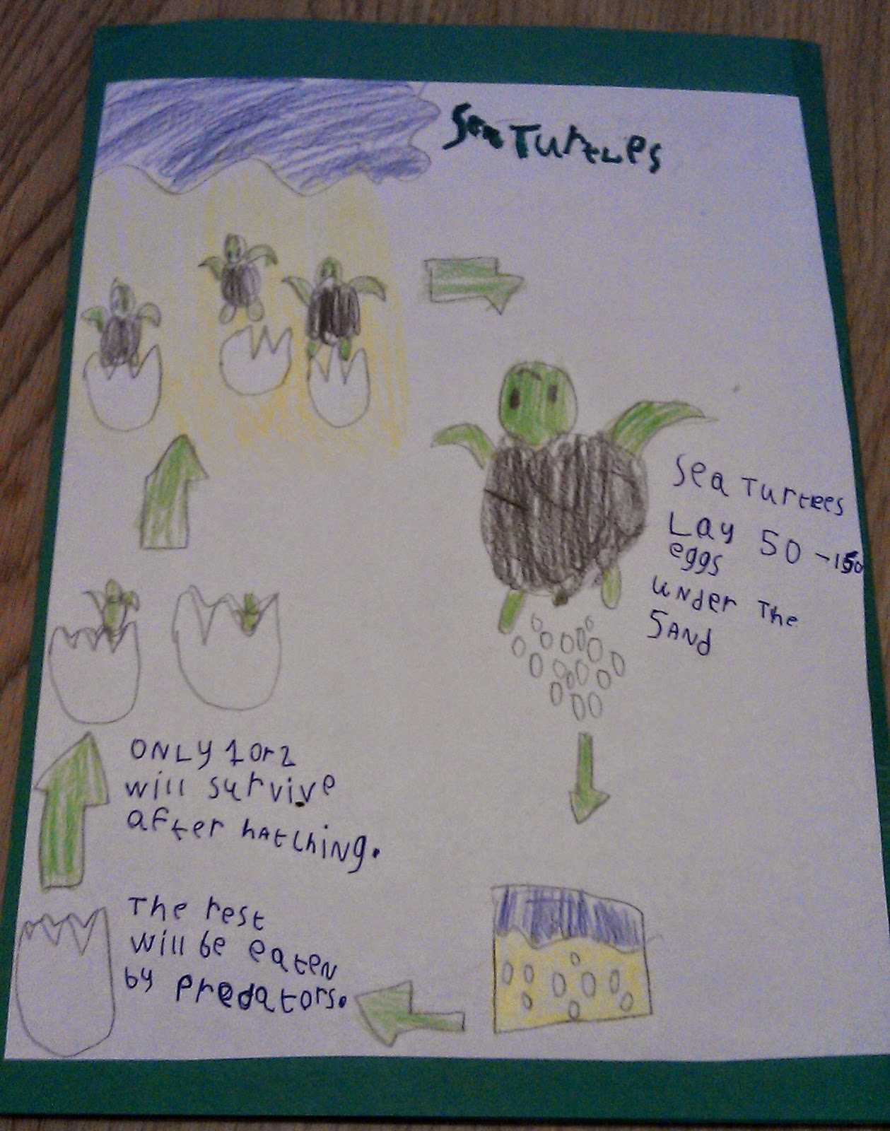 Iman S Home School Sea Turtles Lapbook And Unit Study