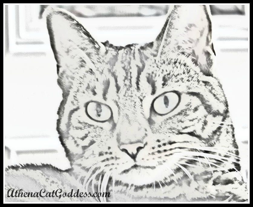 caturday art sketch effect
