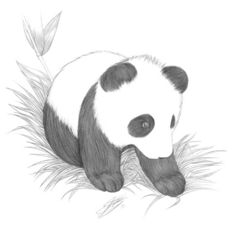 Baby Panda Drawing In Pencil One Plus Wallpapers