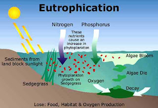 Eutrophication in a lake