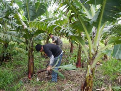 REGIÃO / Produtores rurais da região participam de oficinas gratuitas do Sebrae em abril