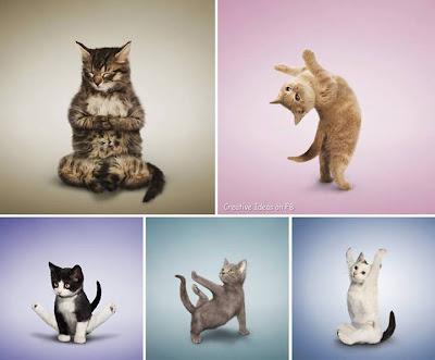 pose kucing bermacam-macam