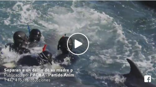 La lucha de una mamá delfín por evitar que le quiten a su bebé