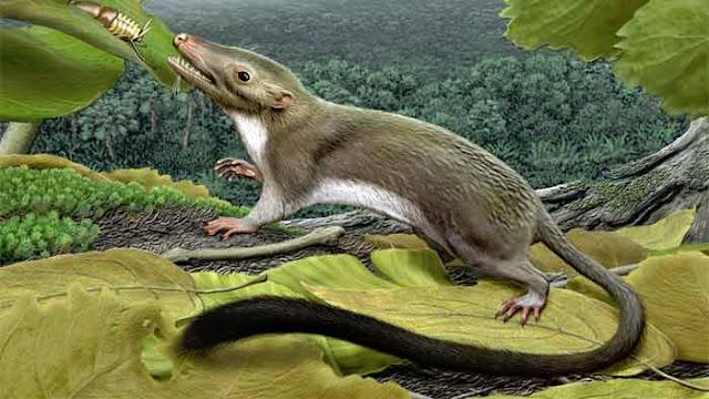 nenek moyang mamalia