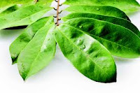 7 Benefits of Soursop Leaves for Health