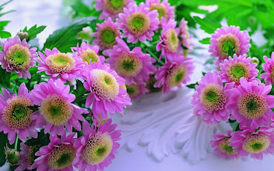 Images Flowers Wallpaper