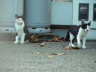 キジトラと白黒猫
