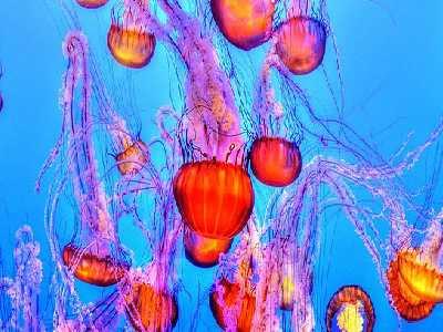 Water Animals Name Jellyfish