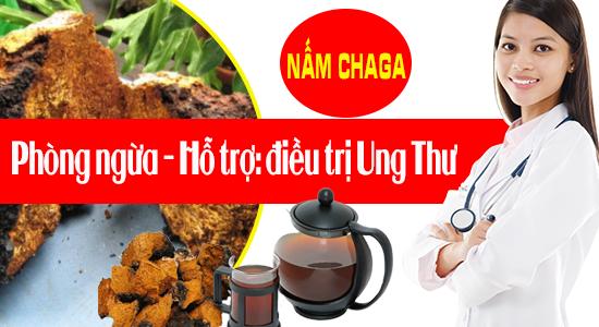 Nấm Chaga - loài thực vật có tiềm năng trị ung thư phổi