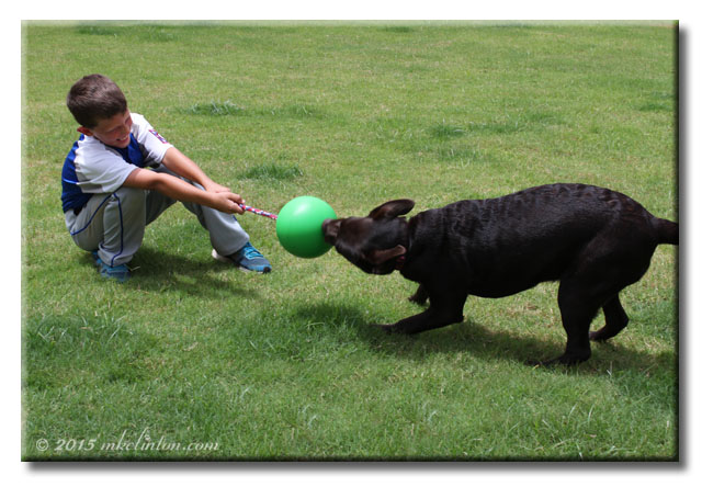 Boy and dog playing tug o war in the grass