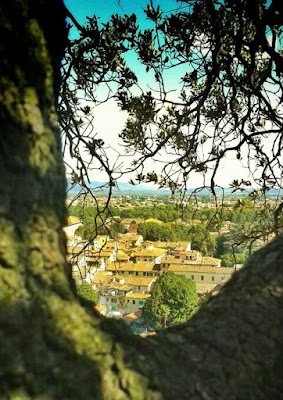 La ciudad de Lucca desde la Torre Guinigi