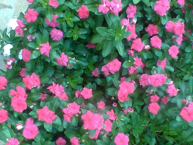Mensagens Com Flores De Bom Dia: A FELICIDADE!: Flor De Bom Dia