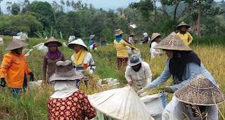 tradisi unik suku batak