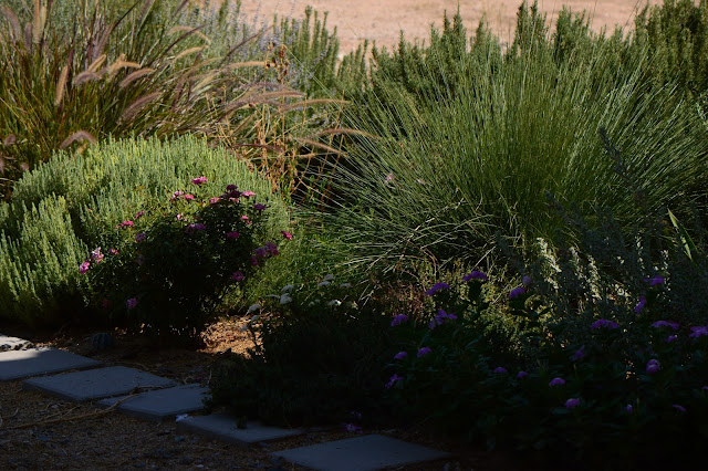 small sunny garden, amy myers, photography, desert garden, tuesday view