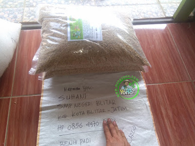 Benih Padi TRISAKTI pesanan PURNOMO / SUHANI  (Sebelum Packing)